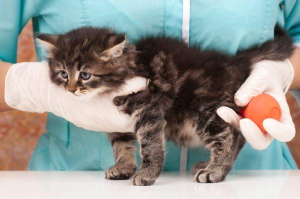 Запор у кота или кошки