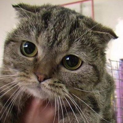 Кот дрожит - основные причины