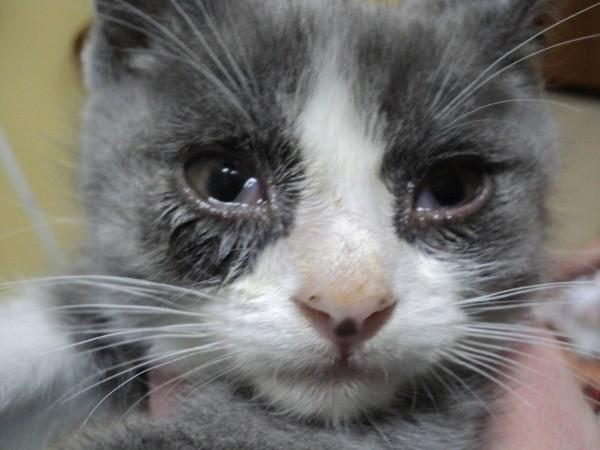У животного слезятся глаза: причины