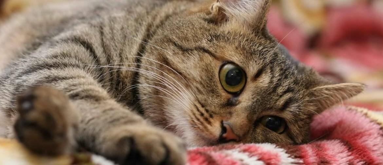 Уколы для кота от простуды — Простудные заболевания