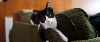 Чем убрать запах кошачьей мочи с ботинок