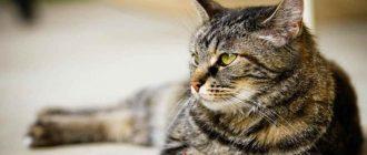 Как правильно сдать биохимический анализ крови у кошек
