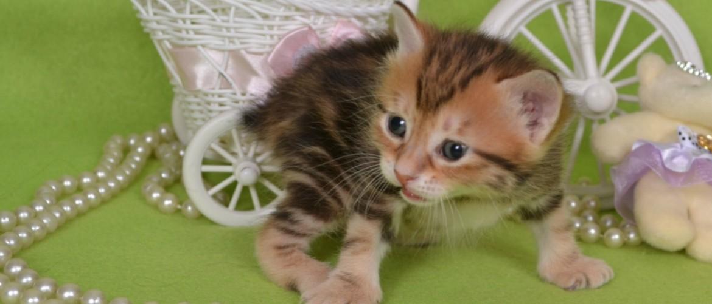 Почему кошка трясет лапами