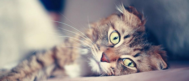 Как глистогонить котенка: препараты и периодичность