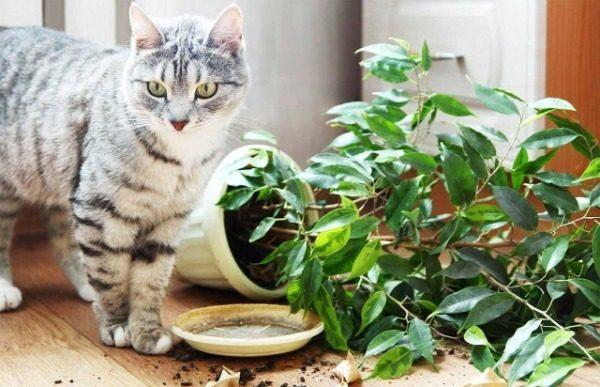 Для чего нужны и как работают отпугиватели для кошек?
