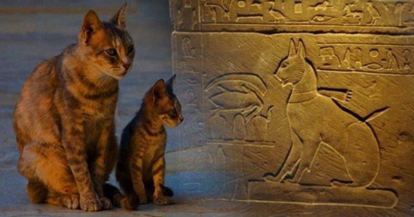 Характер египетских кошек