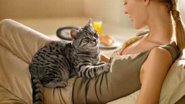 Изучаем кошачий язык любви к владельцу: 13 основных жестов