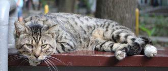 Методы наложения шва после стерилизации кошки и способы ухода в послеоперационный период — Save Animals