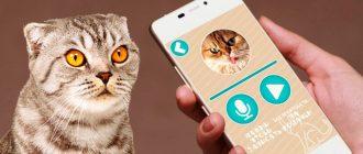 Порода кошек с разными глазами