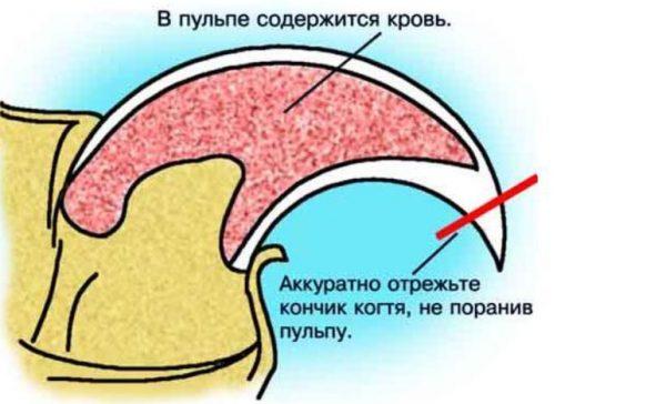 Как правильно стричь: описание процедуры