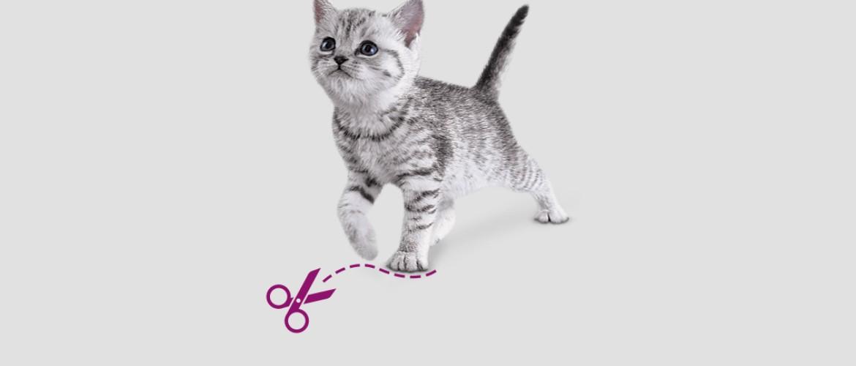 Как и чем подстричь когти котенку выбор инструмента и пошаговая инструкция