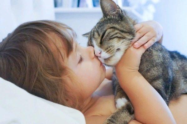 Лечат ли кошки человека?