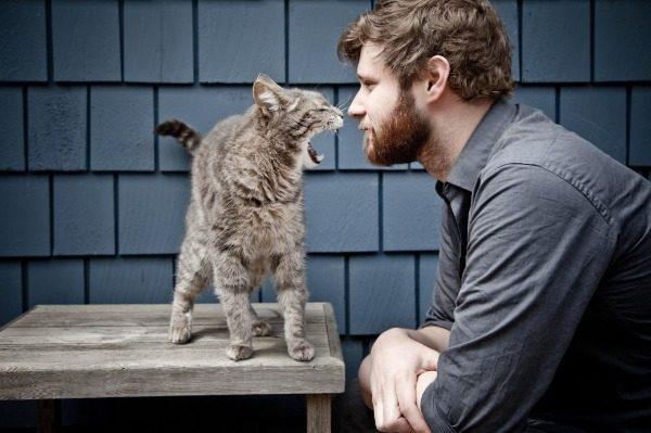 Понимают ли кошки человеческую речь?