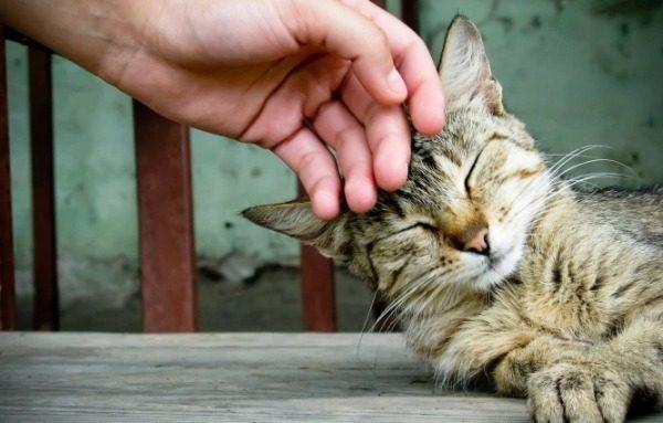Кота вырвало глистами: что делать