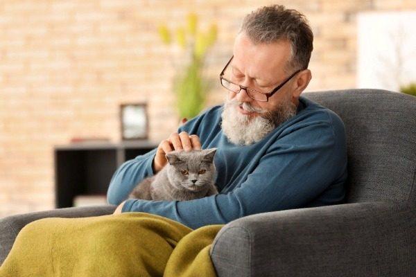 Какие кошки лечат болезни людей?