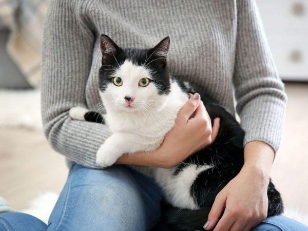 Понос у кошки и кота: причины