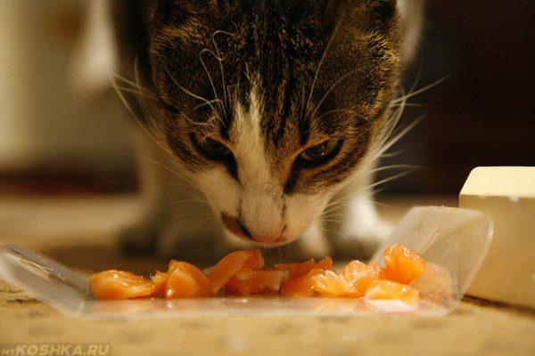 Как кормить кошку правильно натуральной едой