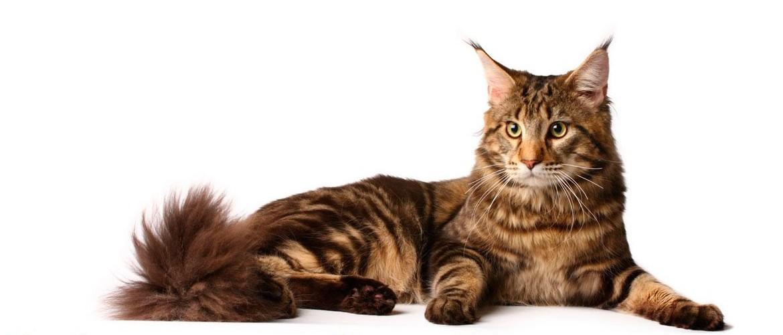 Ринотрахеит у кошек - советы, секреты, рекомендации