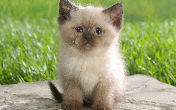 С какого возраста можно брать котенка домой