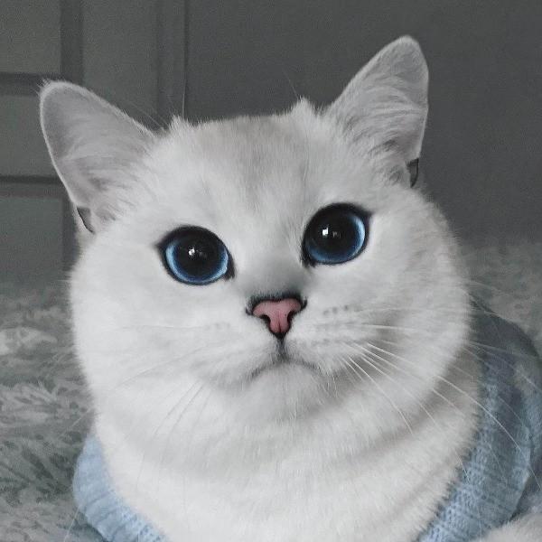Коби - порода кошек: правда или вымысел