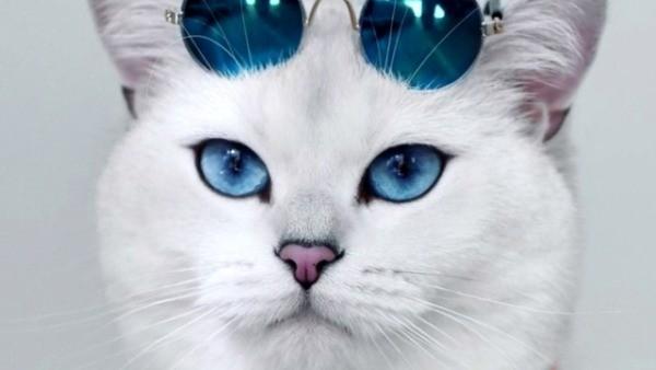 Коби кошка: особенности ухода