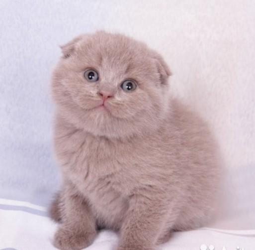 Почему нужно брать котенка с трех месяцев?