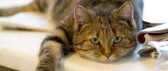 Почему кошка плохо ест и худеет