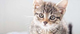 У кошки задние лапы плохо ходят