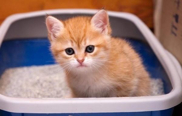 понос у котенка