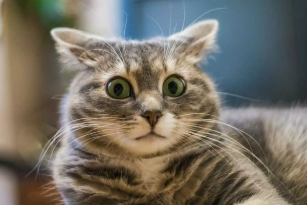 Что такое повадки кошек