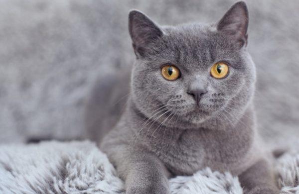 Оценка веса кошки и кота