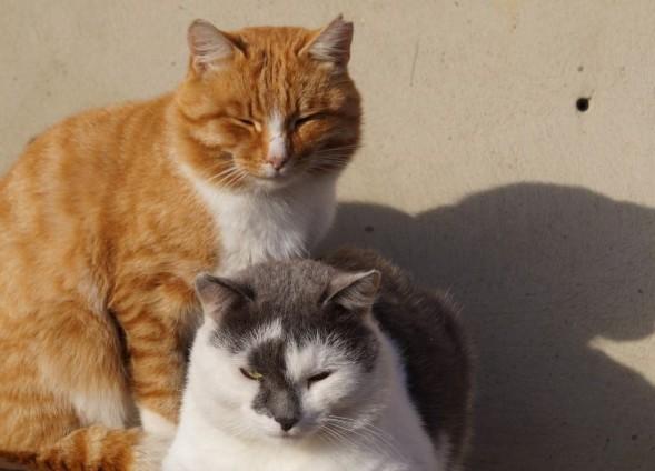 Как определить, в норме ли вес кошки, без весов