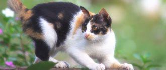 Кот постоянно чешется и лижется ростов