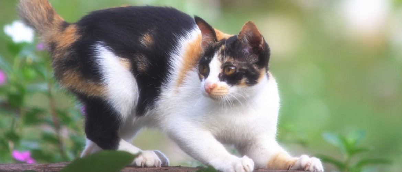 У кошки выпадает шерсть клоками до проплешин: что делать?