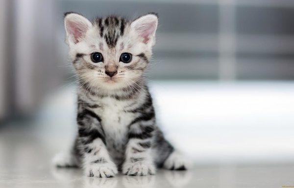 Как правильно глистогонить котят: инструкция