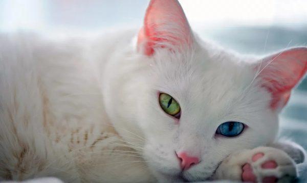 У котенка слезятся глаза: норма или патология