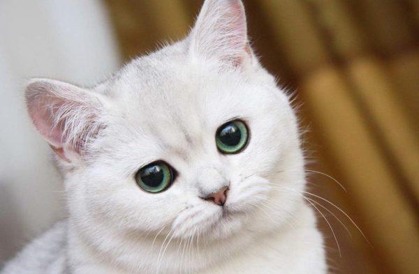 У котенка после еды слезятся глаза