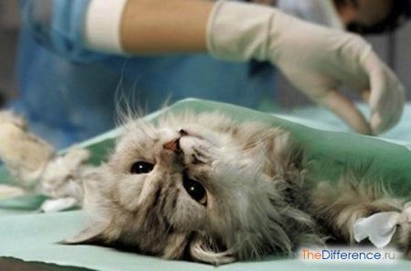 Чем стерилизация отличается от кастрации