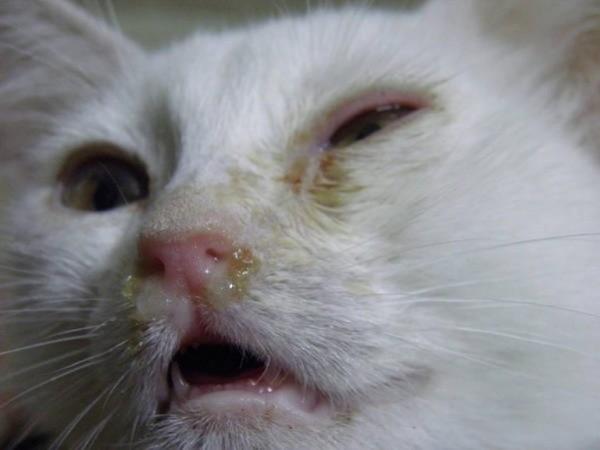 чихание кошек