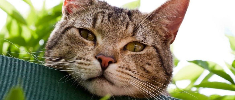Как избавиться от кошек на участке