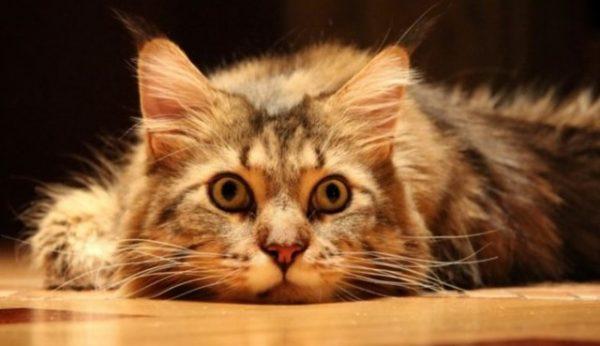 Почему кот метит двери?