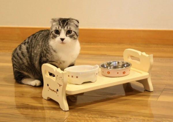 Кот не ест, спит и только пьет воду: 5 причин