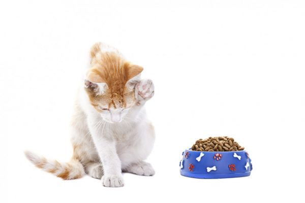 Кошка не ест только пьет воду и спит - норма или патология?