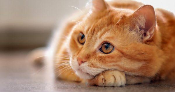 Можно ли кошке капать капли в нос?