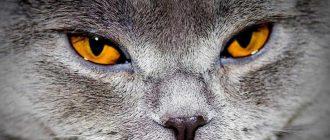Почему у кота насморк и слезятся глаза