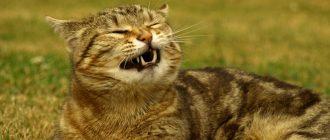 Почему текут сопли у кота