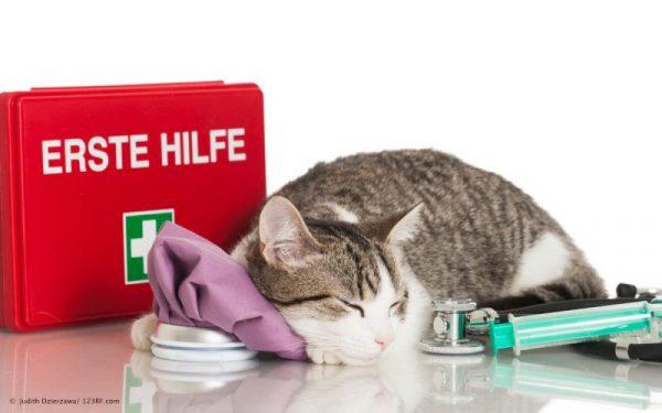 Супрастин для кошек при течке: можно ли
