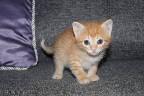Котенку 1 меясц
