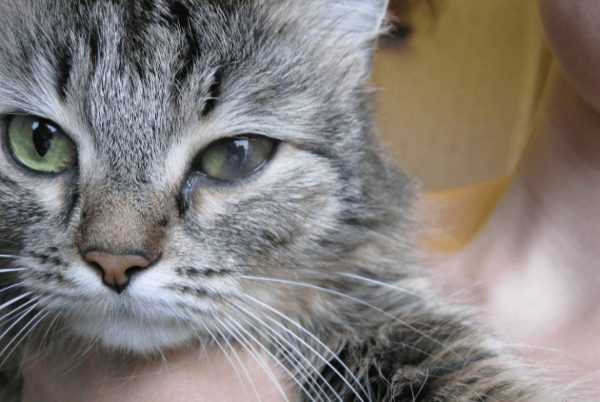 Уколы кошке от аллергии