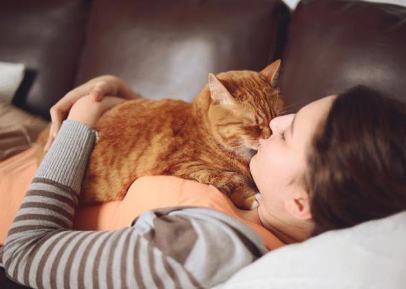 Если кошка вялая, не ест и не пьет: что делать?
